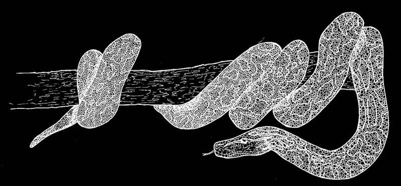 Juliette Seban – illustration flyer design graphique